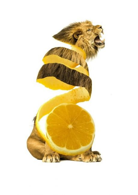 lion-citron