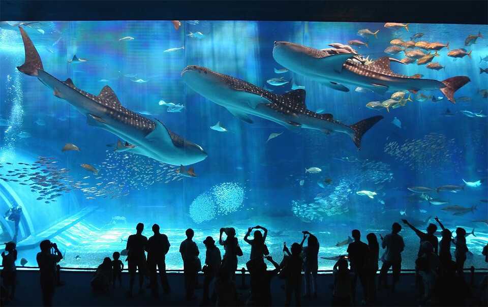 okinawa-churaumi-aquarium-japon