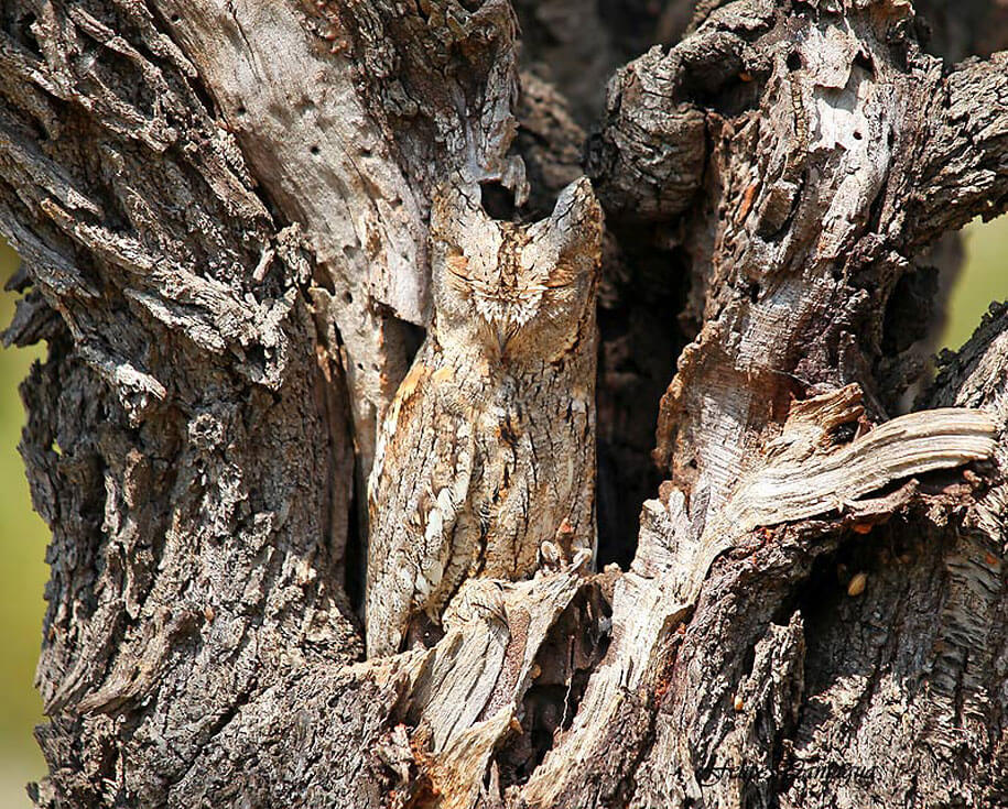 Camouflage animaux photos