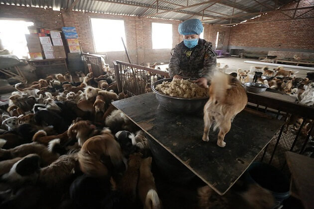 Refuge chiens errants, chine