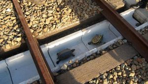 tunnel, tortues, rails, Japon