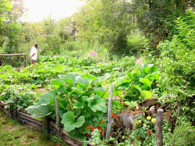 Permaculture: utopie ou alternative crédible ?