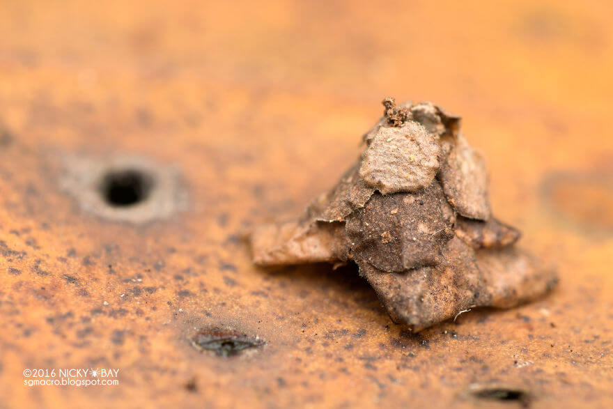 structure-insecte-psychidae