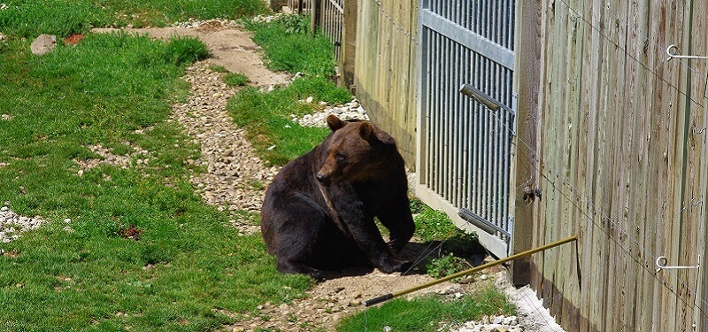Ours, Enclos, Zoo