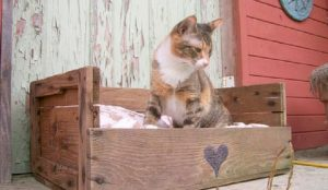 recyclage, palettes, bois, chat