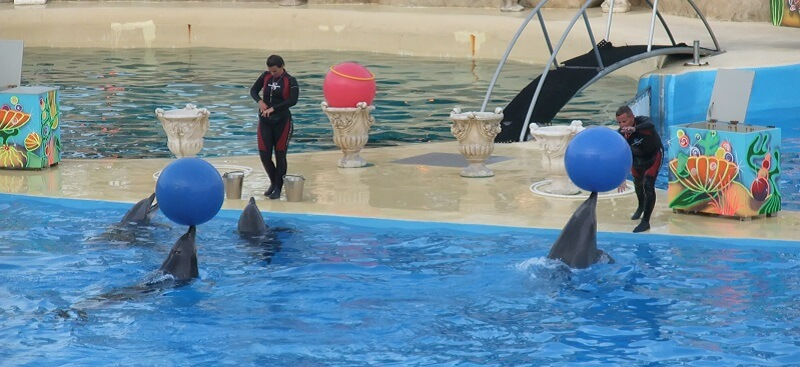 Spectacle, Dauphins