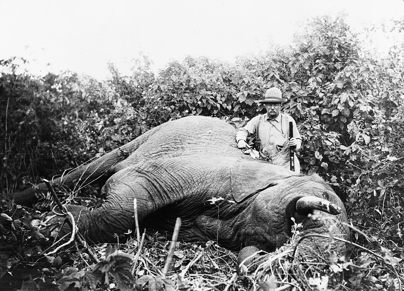 Theodore Roosevelt chasse